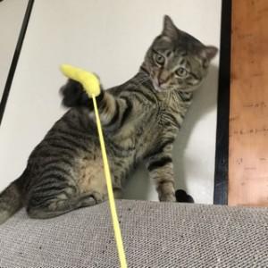 猫のおもちゃ2