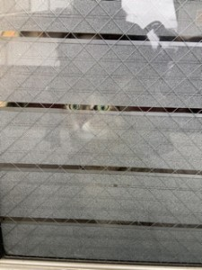 前に住んでいた家の玄関はガラスの引き戸で中が丸見え。防犯と暑さ対策を兼ねて目隠しのフィルムを貼りました。中からうちの猫が覗いています^^