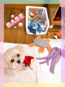 おもちゃが大好きで、いつもここから好きなおもちゃを出して遊んでいるよ♡ 最近のお気に入りは紫色のタコ?!