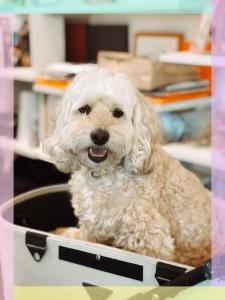 お店では看板犬のほかに、子ども達の笑顔を引きだしたり、【お仕事】もしているんだよ🐶わんっ🐶 僕に会いにきてね♡