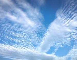 秋の雲になってきましたね~。 空を見上げると一面こんな感じだったので圧巻でした✨