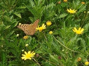 フラワーセンター蝶2