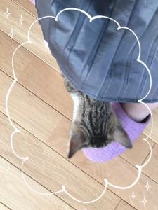 ぴょこっ 猫かわいいなぁ♡ 猫と暮らしてみたいなぁ♡
