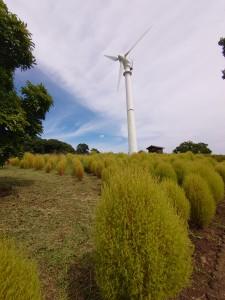 フラワーセンター風車1