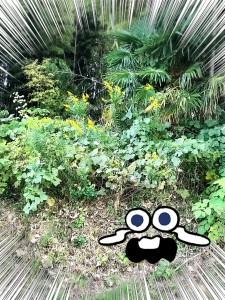 黄色いかわいい秋の花~・・・・って、ブタクサやないかいっっっ!! こわいよ~( ノД`)!! ・・・・へーっくしゅんっ!!